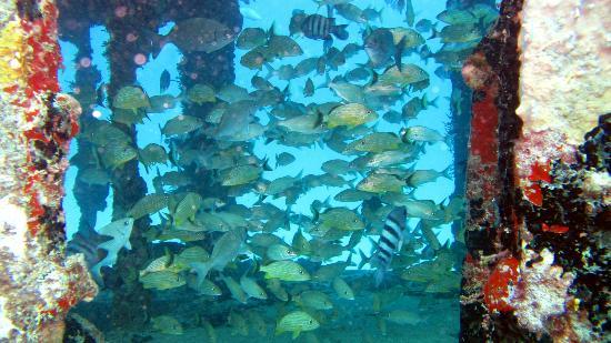 Hotel Mont Vernon: Scuba diving