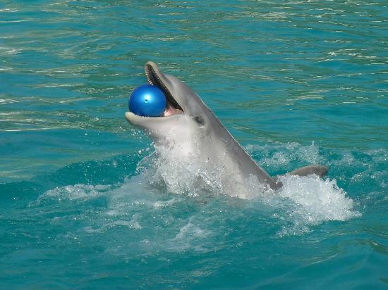 Planete Sauvage: dauphin