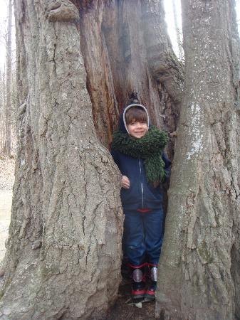 Rupert, Вермонт: Look at me inside a tree!
