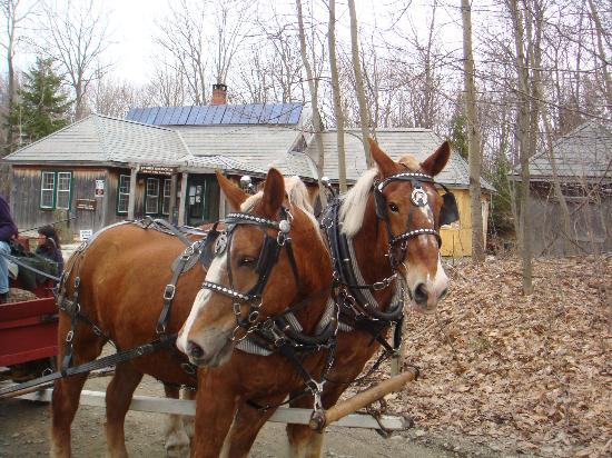 Merck Forest and Farmland Center: Riding on a horse drawn wagon, lots of fun!