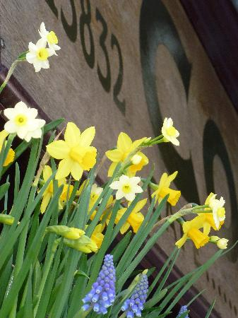 The Cornerstone: Some Spring flowers