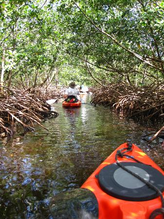 Kayak Utila: Kayaking through the mangroves!!