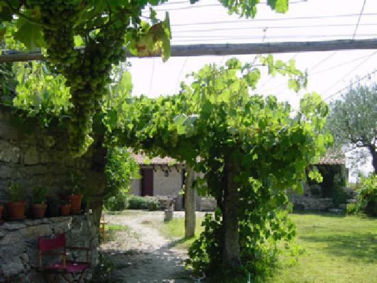 Casa do Castelo Novo: A view of the garden