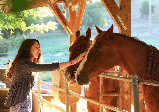 Kenwood Oaks Guest House: Our resident horses LOVE attention!
