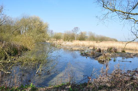 Stodmarsh National Nature Reserve: BEAUTIFUL SCENERY