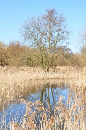 Stodmarsh National Nature Reserve: BLUE SKY DAYS