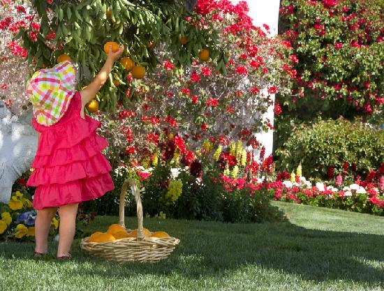 La Quinta Resort & Club, A Waldorf Astoria Resort: Picking fresh fruit