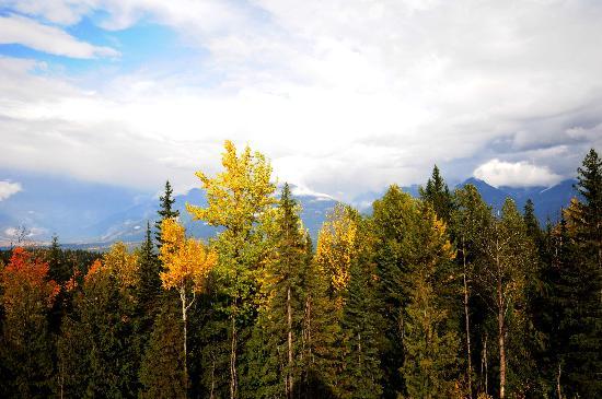 Palliser Lodge: Fall View