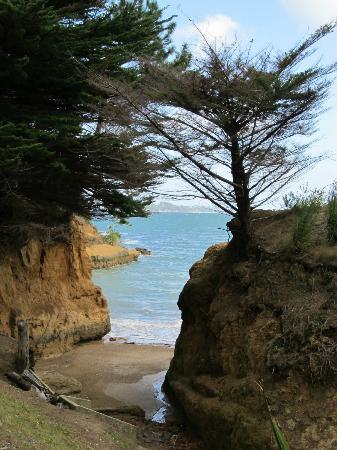 Kawau Lodge & Kawau Island Experience: Lady's Beach, Kawau Island