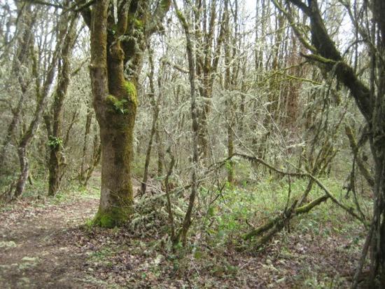 William L. Finley National Wildlife Refuge: woodpecker trail