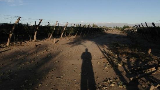 Posada Cavieres Wine Farm: Andengipfel in der Morgensonne