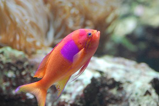 Zoologischer Garten Frankfurt/Main: i pesci