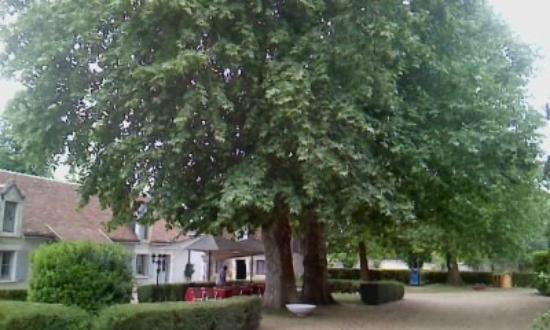 Hostellerie Le Clos du Cher : arbres spendides