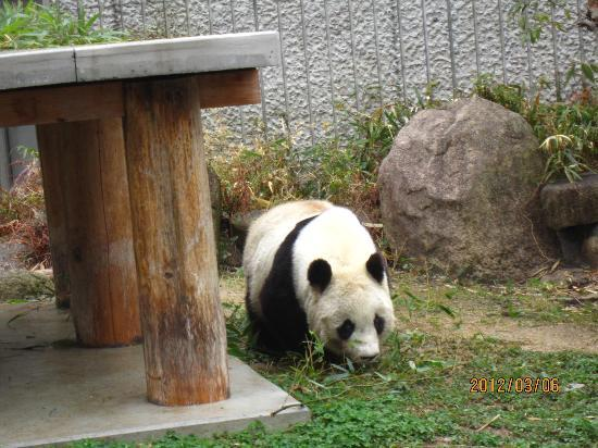 Kobe City Oji Zoo: 動いていました