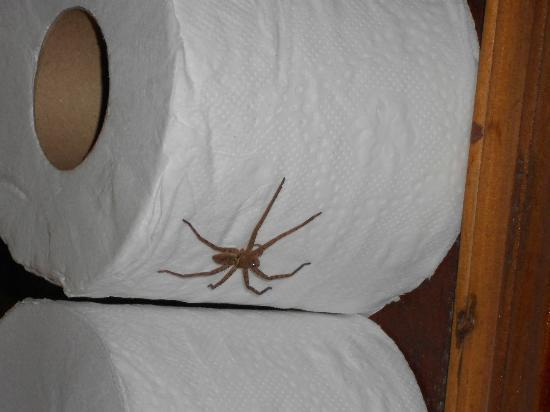 Charm Churee Villa Spider In Bathroom 1st Night