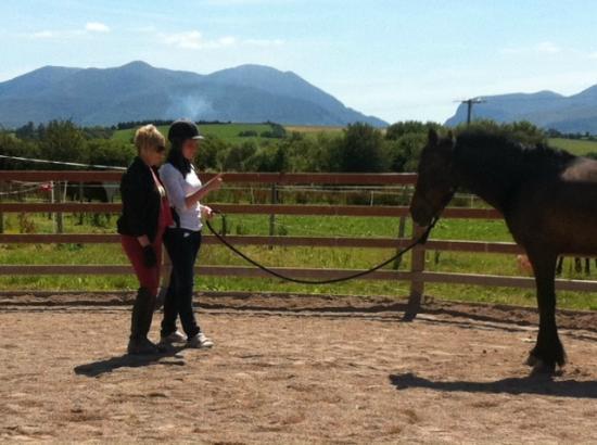 Pony Tales Stables: Natural Horsemanship Lesson