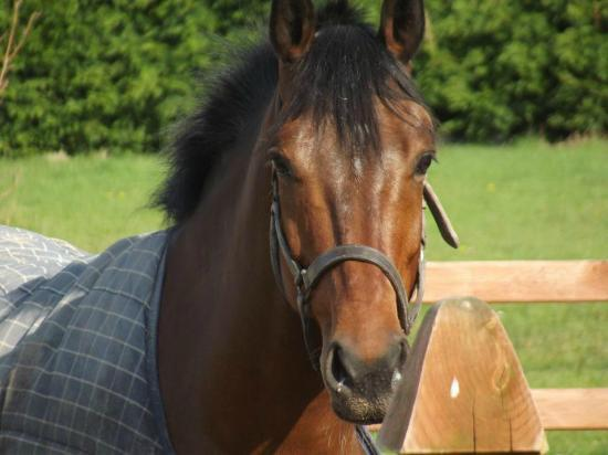 Pony Tales Stables: Galactico Z