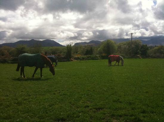 Pony Tales Stables: Grazing