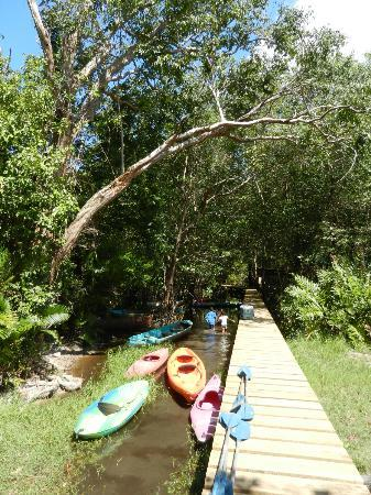 Omega Tours Eco Jungle Lodge: Kayaking