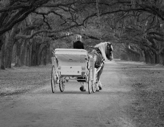Carriage Tours of Savannah : Private Carriage Ride