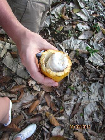 Yerba Buena Guest Cabins: Cocoa in the farm