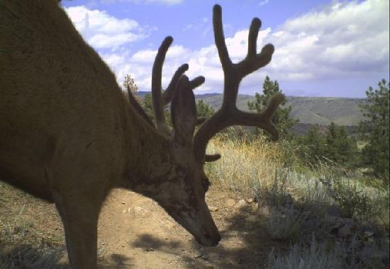 Bobcat Ridge Natural Area: Wildlife abounds!  Check out the photos from the wildlilfe cameras on-site.