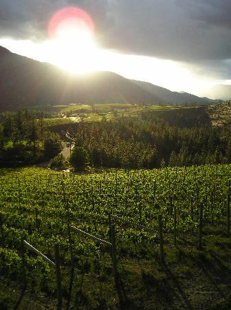 8th Generation Vineyard: Evening sun catches the vineyard in May