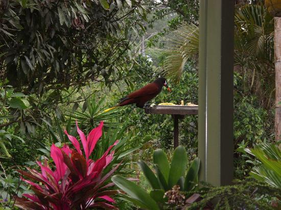 Lucky Bug B & B: one of many birds-have camera ready
