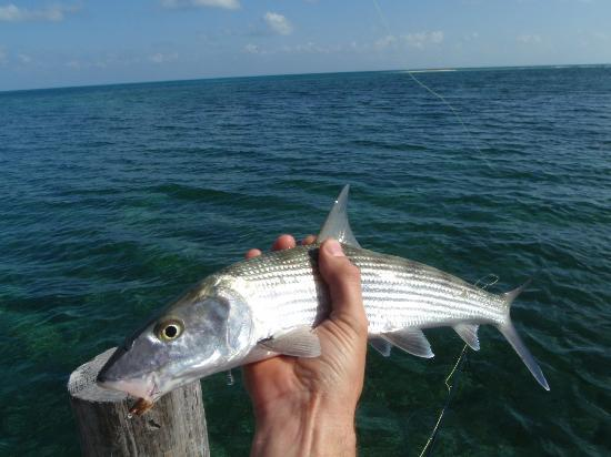 Long Caye Resort: Bonefish!