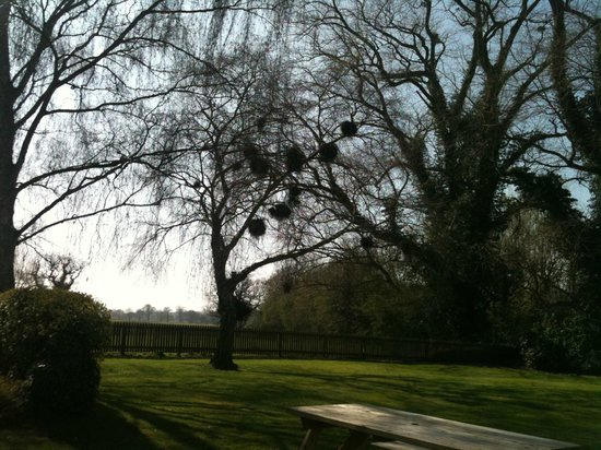 The Egerton Arms: The lovely beer garden - a must visit one!