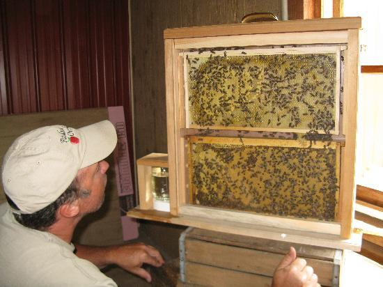 Paulus Orchards: Observational bee hive