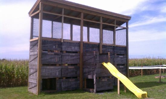 Paulus Orchards: play on the apple bin-azium in the fall