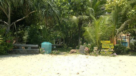 Casa Papaya Boutique Resort: The hotel is located just behind the trees inthe middle of the small jungle