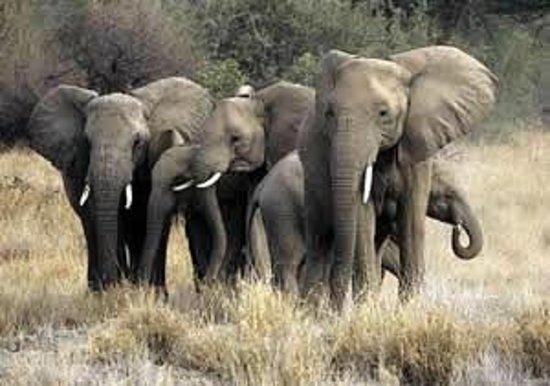African Game Trek Safaris - Day Tours: elephants at masai Mara