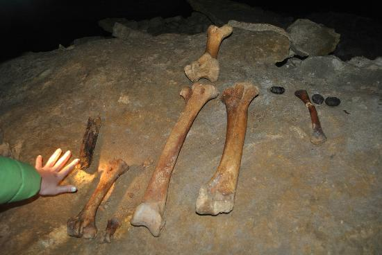 Oparara Kahurangi National Park Guided Tours: Moa bones in the Honeycomb Caves near Karamea