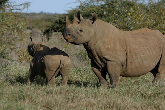 Lion Trails Safaris - Day Tours: Black Rhinos in Sweetwaters Sanctuary