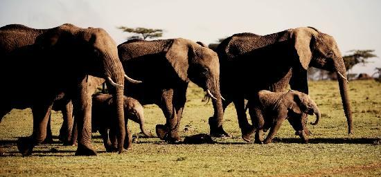 Lion Trails Safaris - Day Tours: Red Elephants in Tsavo East National Park