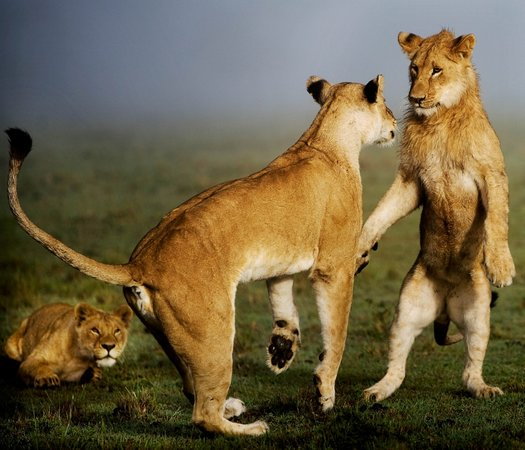 Lion Trails Safaris - Day Tours