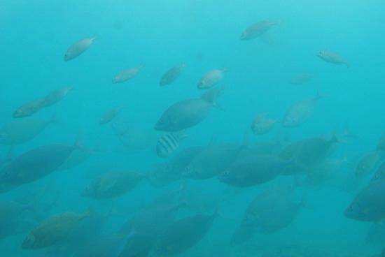 Miyakojima Marine Park: 海中観察施設