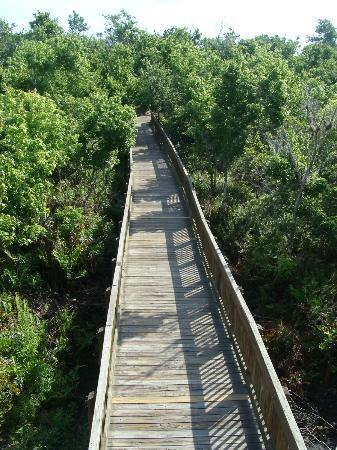 Sawgrass Lake Park: Passerelle vu de la tour.