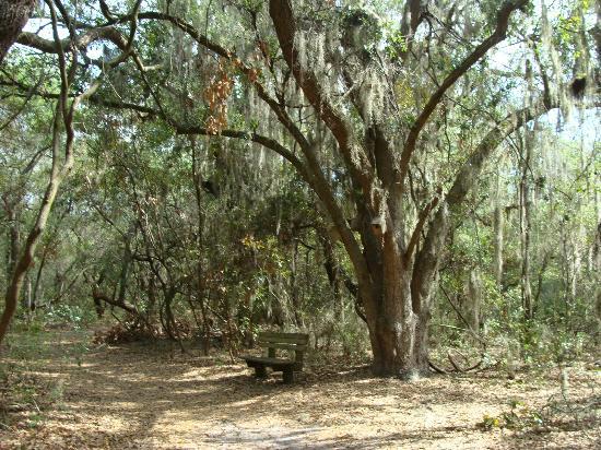 Sawgrass Lake Park: La végétation est superbe