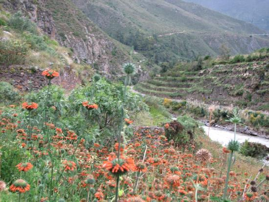 Inca Quarries: flowers by the river, terraces