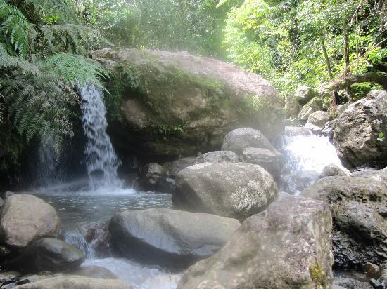 The El Yunque Rain Forest: Typical scene on El Yunque hike