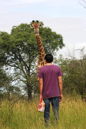 Call of Africa: encuentro con una girafa en Marloth Park