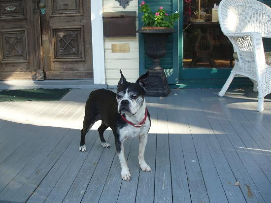 Coppersmith Inn Bed & Breakfast: One of Ellen's dogs!