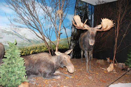 Gros Morne Wildlife Museum: Moose Exhibit