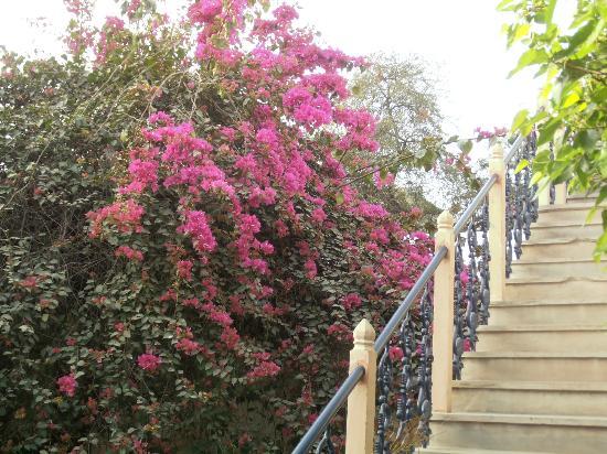 Dera Mandawa : Beautiful gardens