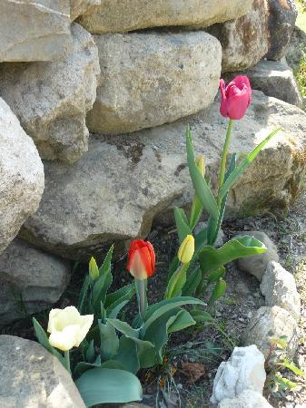 Agriturismo il Palazzo dei Diavoli: the tulips!!