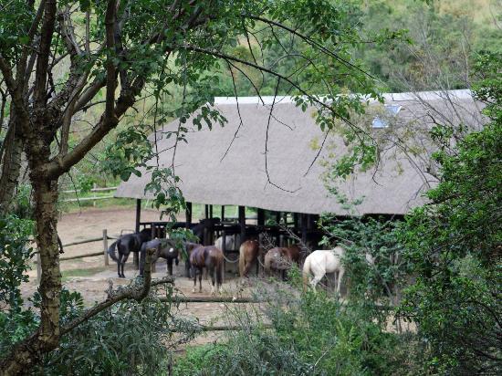 Cavern Drakensberg Resort & Spa: The stables