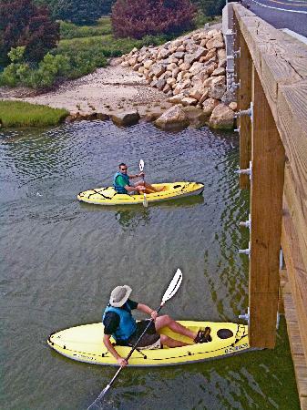 Kayak Tours On Martha S Vineyard